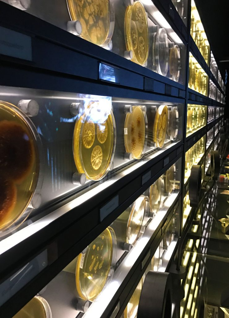 'Wall-of-fame' with more than 100 micro organisms in large petri dishes
